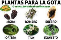 Salud Natural, Heartburn, Natural Medicine, Natural Remedies, Healthy Life, Herbalism, Herbs, Plants, Foot Pain