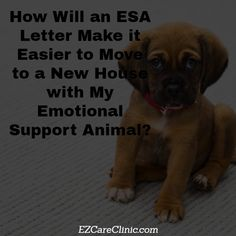 Emotional Support Animal Letter for Housing For those who own any type of pet, you likely already know the difficulties and challenges that come with finding a practical home to lease or rent.   #EmotionalSupportAnimal #esa #esabenefits #esaclinic #esadoctors #esahousing #esalandlord #ESAletter #esarentcontrol