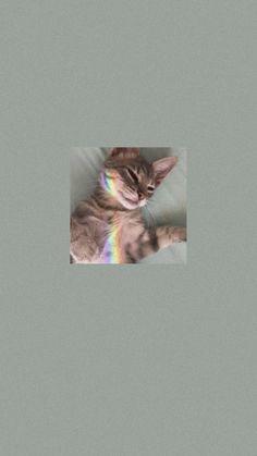 Framed Wallpaper, Lock Screen Wallpaper, Aesthetic Backgrounds, Aesthetic Wallpapers, Phone Backgrounds, Cute Wallpapers, Art Girl, Kittens, Cute Animals
