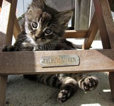 'All I want to do is Sleep and Play' - Adorable Little Baby Kitten -