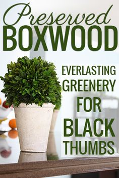 Preserved boxwood: REAL greenery that never needs to be watered? I'm in!