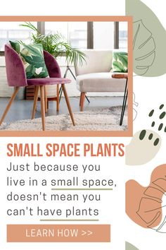 Learn how to choose the best indoor plants for your studio, loft or apartment. These 7 apartment plants are great for small spaces. Whether you need a low light plant, direct light plant or are looking for an aesthetic plant, you'll find the best one for your apartment decor in this article. Best Indoor Plants, Cool Plants, Air Plants, Apartment Plants, Apartment Living, Types Of Houseplants, Low Light Plants, Plant Aesthetic, Low Lights