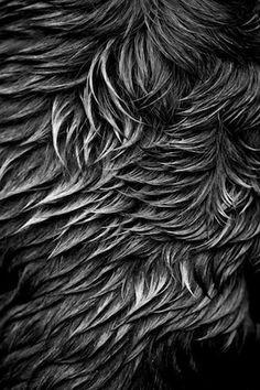 "Jeremy Barnard Haley's Wet Back Artist's Archival Giclées from digital captures, 21x27"" frame size"