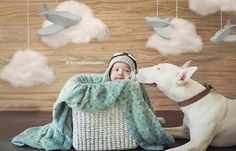 Bull terriers love Bull terrier y bebé  Sesión bebé y mascota, amor perruno