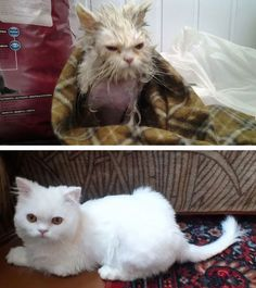 Cat Before and After Rescue