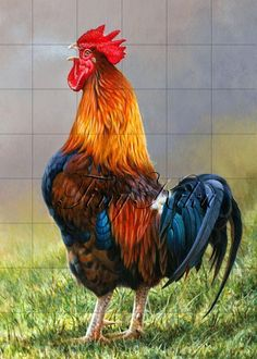 : Illustration Ltd is proud to exclusively represent Andrew Hutchinson, a profes. - : Illustration Ltd is proud to exclusively represent Andrew Hutchinson, a professional wildlife and - Beautiful Chickens, Beautiful Birds, Animals Beautiful, Beautiful Pictures, Rooster Painting, Rooster Art, Chicken Painting, Chicken Art, Chicken Animal