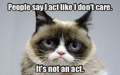 Grumpy Cat Memes That You Will Love! Cute Animal Memes, Funny Animal Quotes, Animal Jokes, Cute Funny Animals, Funny Animal Pictures, Cute Cats, Funny Quotes, Grumpy Cat Quotes, Funny Grumpy Cat Memes
