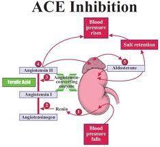 ace inhibitors nursing - Google Search