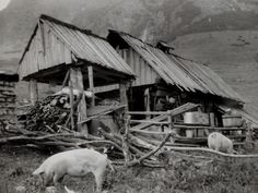 Komárnik a v ňom dozrieva ovčí syr