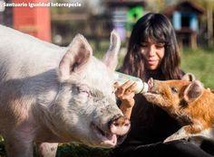 Laura y Matilda dos cerditas rescatadas de la cruel industria de la carne hoy crecen rodeadas de amor y con todo el respeto y los cuidados que merecen
