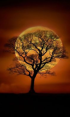 Tree - so calm