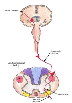 The e-tutorial demonstrates how to perform a peripheral nervous examination.