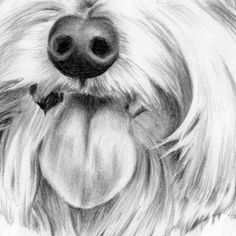 Animal Drawings How to draw a dog - Sandra Angelo teaches online art lessons on how to draw animals and more. Here she shares a step-by-step on how to draw this curious little part of a dog's face. Animal Sketches, Animal Drawings, Eye Drawings, Drawing Tutorials, Drawing Techniques, Art Tutorials, Realistic Eye Drawing, Body Drawing, Figure Drawing