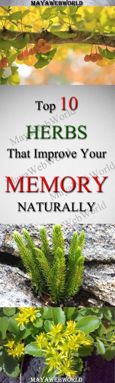 Top 10 Herbs That Improve Your Memory Naturally – MayaWebWorld