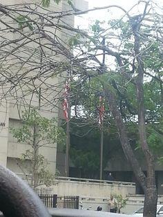 Las banderas estan siendo tapadas por las ramas.