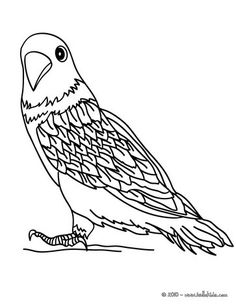 parakeet coloring page if you are crazy about coloring sheets you will love this