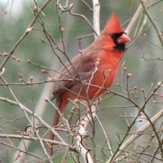 The winter season is hard on wildlife, but most of all the birds. Some bird species migrate to warmer climates, but many do not. There is quite...