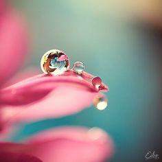 morning on a flower, dauwdruppel op een bloem, beauty and photography,