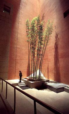 #extint #exterior #courtyard #warm #earth #wall corner #planting #tree #calm #introspective #sunlight #natural #shaft #beam #spot #dry #atrium