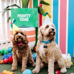 Doggie smash cakes, puppy teepee chill out zones, a grooming salon and photo booth - see the all the photo inspiration on how to throw your own puppy party. Dog Lover Gifts, Dog Lovers, Dog First Birthday, Puppy Party, Dog Bandana, Dog Mom, Smash Cakes, Photo Booth, Grooming Salon