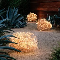Copper-wire lighting can turn a mild nuisance—tumbleweeds—into something magical. Place them along a garden pathway, hiding extension cords beneath nearby plants or fencing.