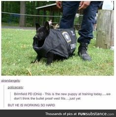 police-puppy funny animal pictures wtf work Weird Training Puppy Puppies Pun Pretty Police pictures lol job hilarious Great funny First Day Of Work First dogs dog Day cute Cops Cop Cool Awesome Animals Animal adorable Cute Funny Animals, Cute Baby Animals, Funny Cute, Hilarious, Cute Puppies, Cute Dogs, Cute Babies, Pugs, New Puppy