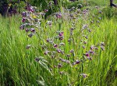 Salvia, Paradis, Interiors, Green, Therapy, Plant, Sage