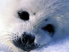 Seal pup!