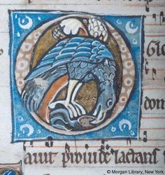 Psalter, MS M.313 fol. 150v - Bird biting object in beak, on gold ground in decorated initial O inside painted frame of Hymn.
