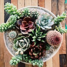 Good morning all you succulent lovers. Come plant something this weekend! #succulentsaturday #plantsomething #diy #shoppigment