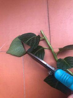 Huerto Hydrangea Care, Garden Design, Patio, Base, Floral, Green, Cactus Plants, Gardens, Summer Plants