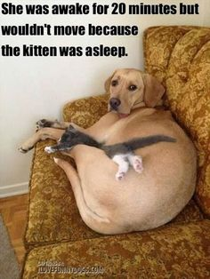 She was awake for 20 minutes but wouldn't move because the kitten was asleep. Cute! Virtually eliminate pet odors in your home with CritterZone. http://www.critterzoneusa.com