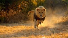 Top 15 Fastest Animals In The World - According to the human nature, we prefer the fast things as fast cars, fast computers and the fastest animals that are excellent in hunting animals be... - .
