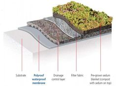 Image below shows an extensive green roof section (sedum finish) low maintenance. Description from tuff-roofing.co.uk. I searched for this on bing.com/images