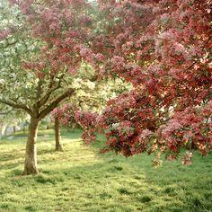 Flor de Cerejeira em Nova York   Stefany