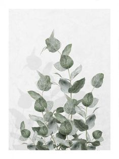 Beautiful botanical poster of a Monstera leaf. The poster is perfect to combine with other nature posters in a gallery wall. Window Poster, Poster Mural, Kunst Poster, Poster Wall, Poster Prints, Morning Sun, Morning View, Elephant Poster, Lion Poster