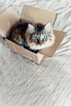 Cardboard Boxes And Cats: The Mystery Is Solved! | The Animal Rescue Site Blog