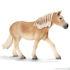 New Haflinger mare