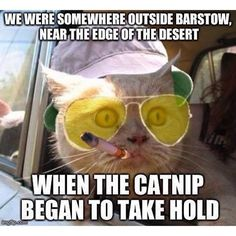 If Hunter S Thompson were a cat