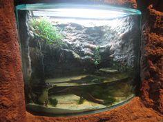 Newport Aquarium Nov. 2013 - Gator Alley - Spectacled Caiman Exhibit