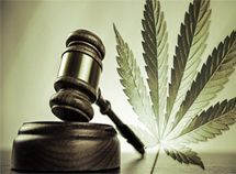 State Marijuana Laws Triumph: Court tells Department of Justice to 'Bud' out - DOJ can't prosecute medical marijuana users and growers in states where it is legal. Marijuana advocates won a small battle Tuesday, August… Medical Marijuana, Cannabis News, Marijuana Recipes, Benoit Hamon, War On Drugs, Cannabis Plant, Cannabis Edibles, Special Forces, Federal