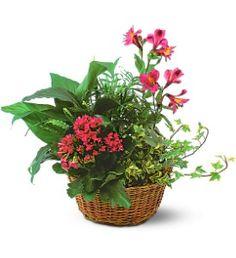 Dish Garden with Pinks  Item TF139-3
