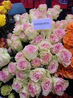 flowers esperance roses take time to smell the roses pinterest