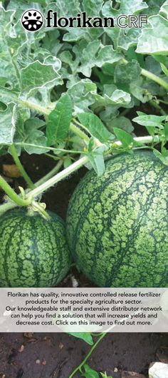 FlorikanCRF - Family Owned, Florida Based Manufacturer of Controlled Release Fertilizer Agriculture, Farming, Farm Life, Fields, Watermelon, How To Find Out, Fresh