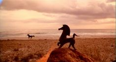 movie still from The Black Stallion