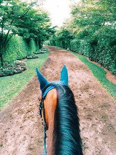 Grand Prix Village horse path. Wellington, Florida