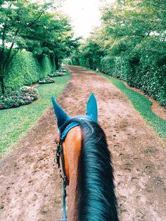 Grand Prix Village horse path. Wellington, Florida