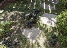 Hardscaping 101: Ground Covers to Plant Between Pavers Garden Steps, Garden Paths, Garden Bed, Landscape Design, Garden Design, Landscape Fabric, Deck Design, Grass Alternative, Gravel Landscaping