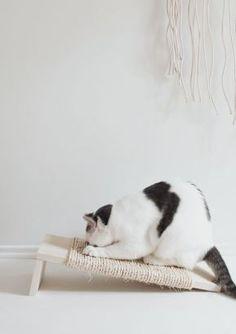 Comme promis voici le petit DIY d'un grattoir pour chat ! Et oui, on les aime…