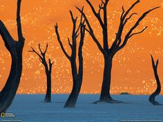 Dead Vlei, Namibia. Incredible but real place!